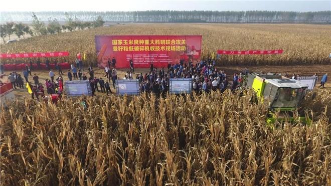 玉米籽粒机械化收获技术加快提升