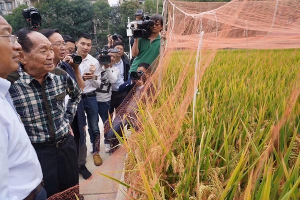 袁隆平领衔攻关第三代杂交稻取得重大突破 首次测产平均亩产1046.3公斤