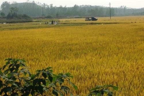 农业农村部休闲农业重点实验室等13个建设项目的公示