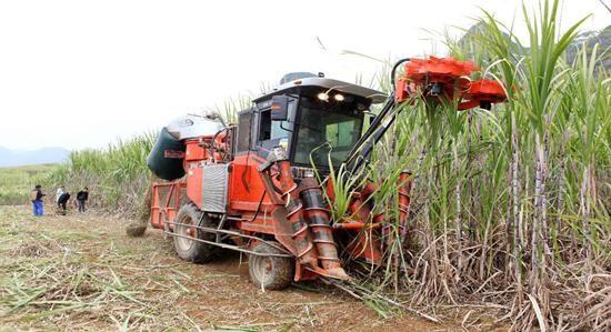 [新中国成立70周年特稿之七] 我国甘蔗机械化收获现状与发展路径选择
