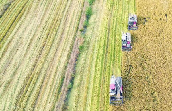 中巴組建聯合實驗室提升巴農業自動化水平
