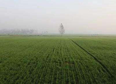 河北省关于印发《河北省2019年冬前小麦苗情分析及冬春季管理技术建议》的通知