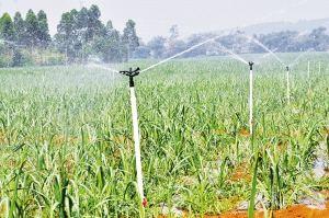 广西关于印发糖料蔗蔗种预处理机械种植技术模式指导意见的通知