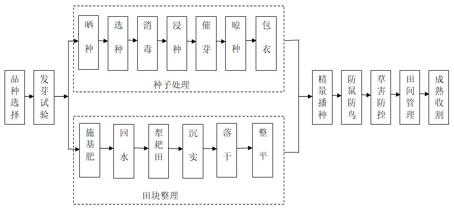 广西关于印发水稻精量机械穴直播生产技术规程(试行)的通知