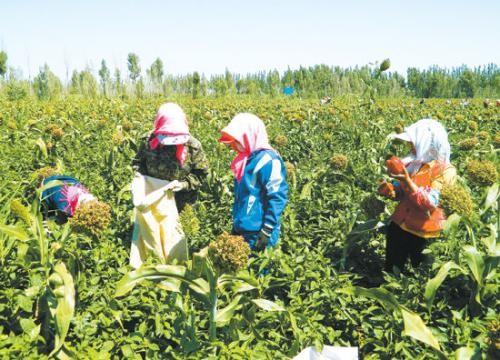 湖北推动农民专业合作社高质量发展
