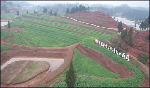 從重慶、廣東兩地的鮮活實踐看—— 南方丘陵山區機械化該如何破題