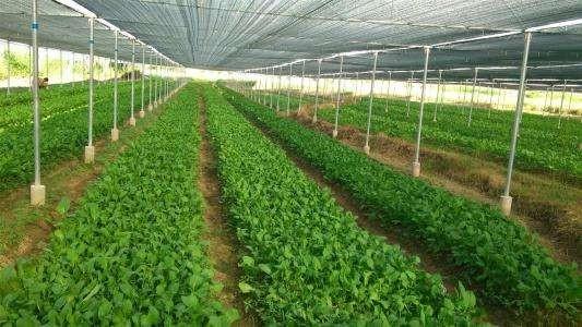 全国农业技术推广服务中心关于应对低温雨雪天气保障蔬菜生产的技术指导意见