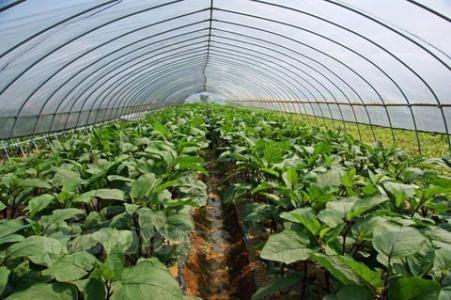 安徽省关于印发冬春蔬菜生产技术指导意见的通知