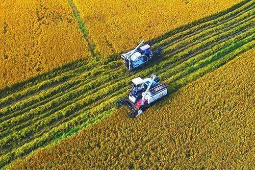23.7724亿元!吉林省下达2020年中央财政农田建设补助资金