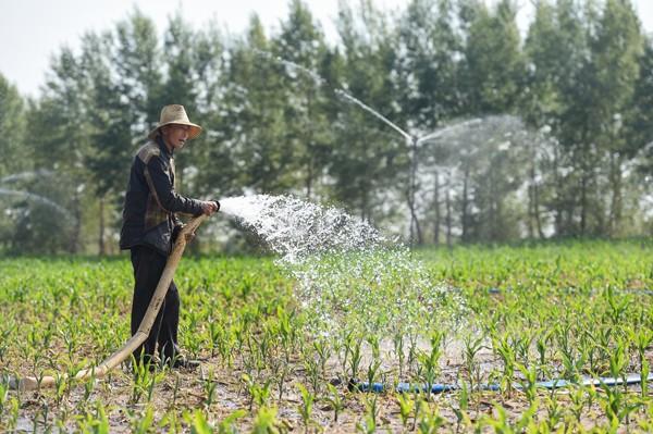 井越打越深,水越出越少!保糧還是保水?
