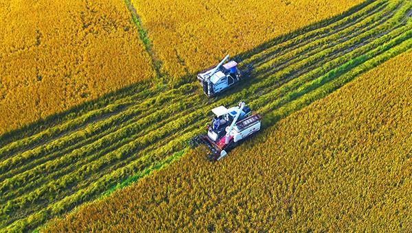 江西省财政厅下达2020年中央财政农田建设补助资金213357万元
