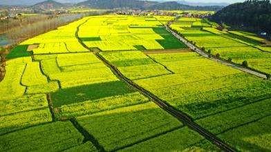 补贴1500元/亩!广西2020年将将新增高标准农田220万亩以上