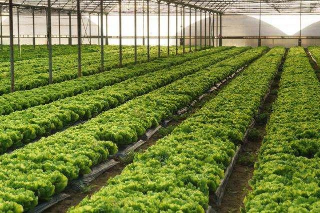 吉林省农业农村厅关于印发新型冠状病毒感染的肺炎疫情防控期间设施蔬菜和食用菌生产技术指导意见的通知