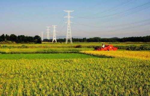 加大农业农村改革步伐 推进乡村振兴战略实施