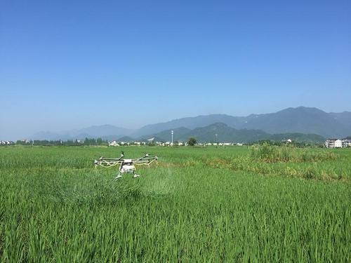 水稻春耕期间植保技术的应用探析