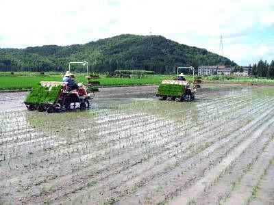 水稻育插秧机械化技术