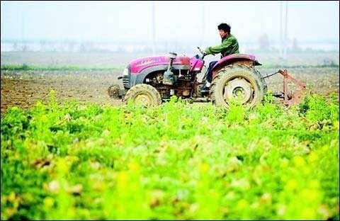 财政部、农业农村部联合印发通知六项措施支持新冠肺炎疫情防控期间农产品稳产保供工作