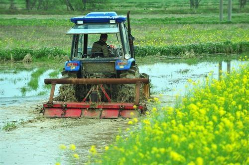 农业农村部:防疫情保春耕 全力打好小康之年农业丰收攻坚战