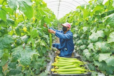 农业农村部发布1334家农民合作社水果类产品供应信息