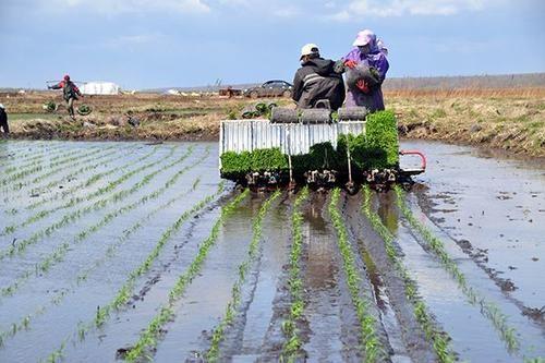 广东着力推动水稻机种水平提升