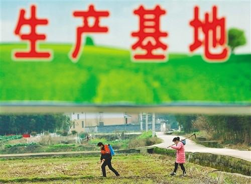 2020年农业农村市场信息工作要点