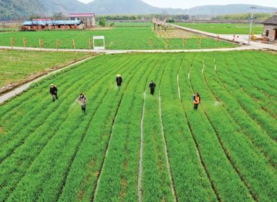 青岛市农业农村局关于进一步规范耕地地力保护补贴小麦种植面积核定工作的通知