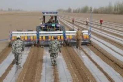 山東關于印發2020年棉花備播和播種技術意見的通知