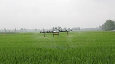 2020年春季主要農作物科學施肥指導意見