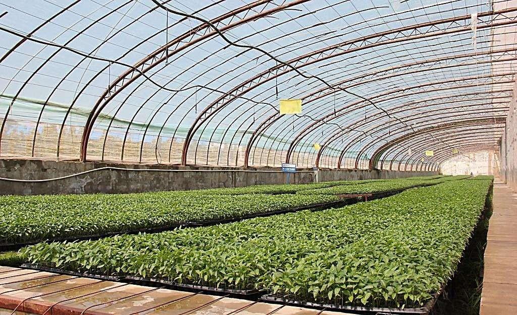 2020年春季蔬菜集约化育苗生产技术意见