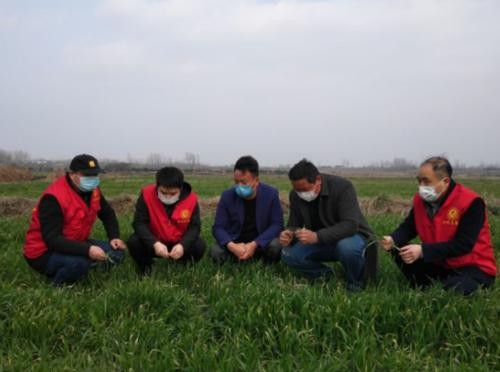 科技助農增信心——全國各地加強農技指導助力春耕備耕