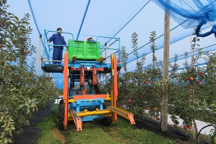 甘肃省2020年经济作物和果业技术推广工作指导意见
