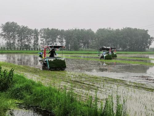 江蘇省農業農村廳關于全面高質量完成糧食生產全程機械化整體推進示范省建設工作的通知
