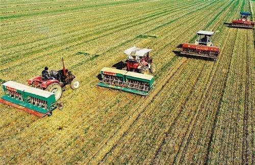国家统计局:全国冬小麦播种面积3.31亿亩