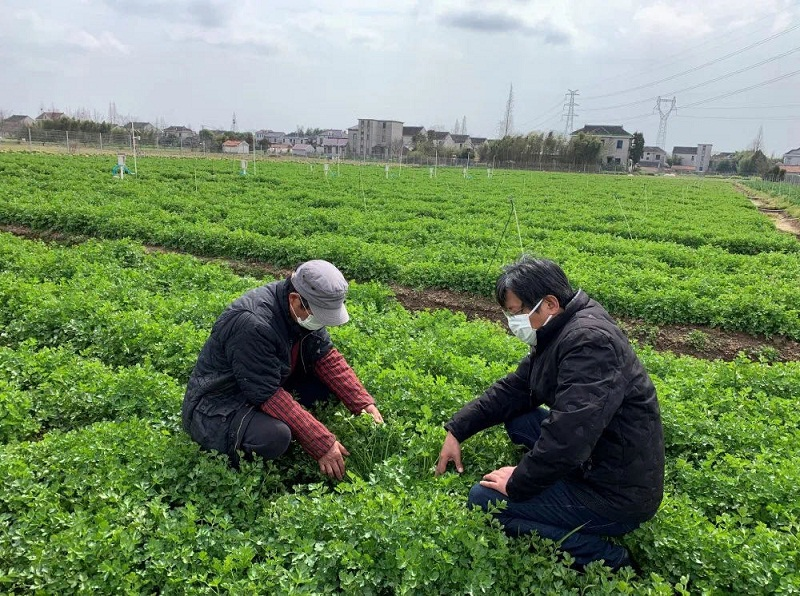 科技助力春耕备耕 上海市农科院专家团队在行动
