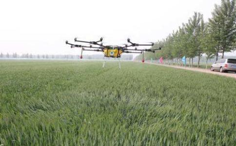 山东省2020年小麦重大病虫防控技术意见