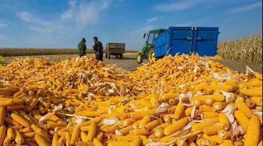 玉米收获机质量哪家强?山西省调查结果出炉