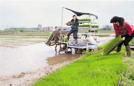 新增50万亩!广东省分解2020年早稻种植任务
