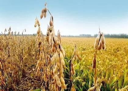 2020年东北春播大豆技术指导意见