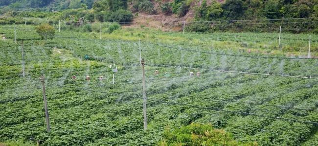 國內外無人化農業發展比較與借鑒
