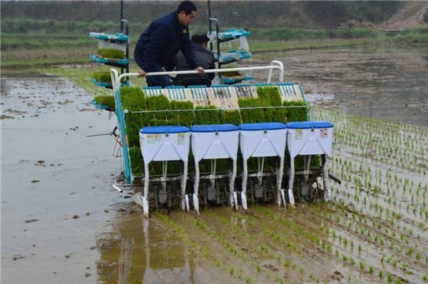 广西水稻机插秧同步侧深施肥技术规程(试行)