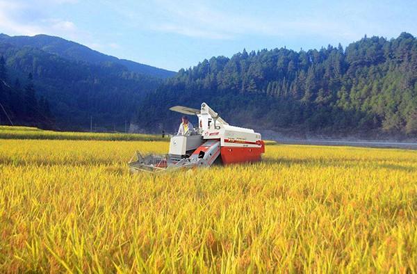 广西2020年水稻耕种收综合机械化率发展指标80.80%