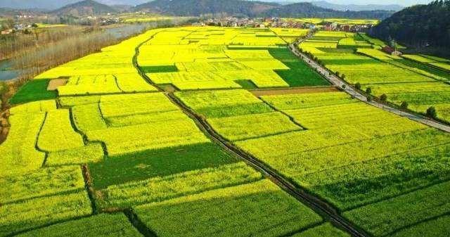 安徽省支持新型农业经营主体建设高标准农田