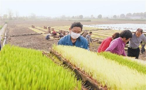 连年丰收,库存充足—— 我国粮食供应能应对各种考验