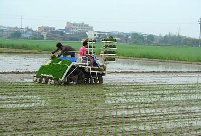 湖南早稻机械化种植面积增加120万亩