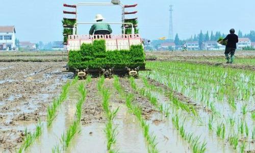 南方双季稻区早稻全程机械化生产模式