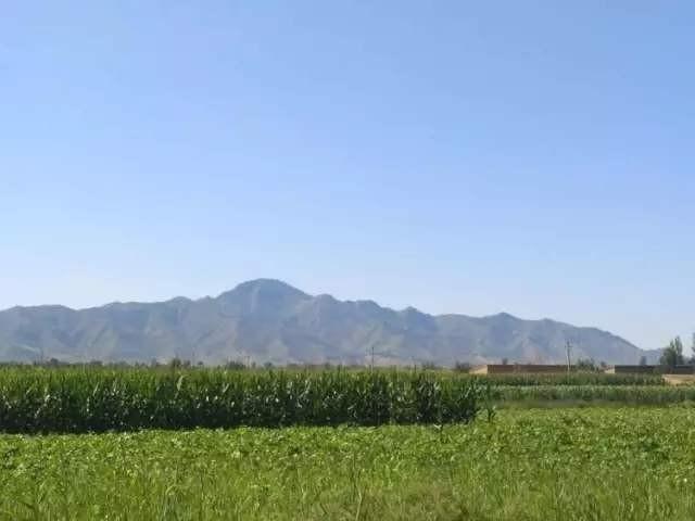 桑干河畔10万亩有机旱作农业开播