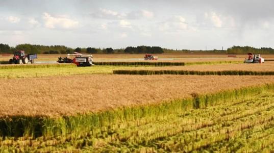 中国产粮大省吉林流行土地托管助力粮食丰收