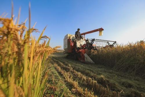 今年河北粮食总产量力争达到373.9亿公斤