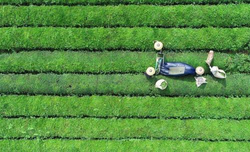 疫情倒逼茶产业加速机械化智能化