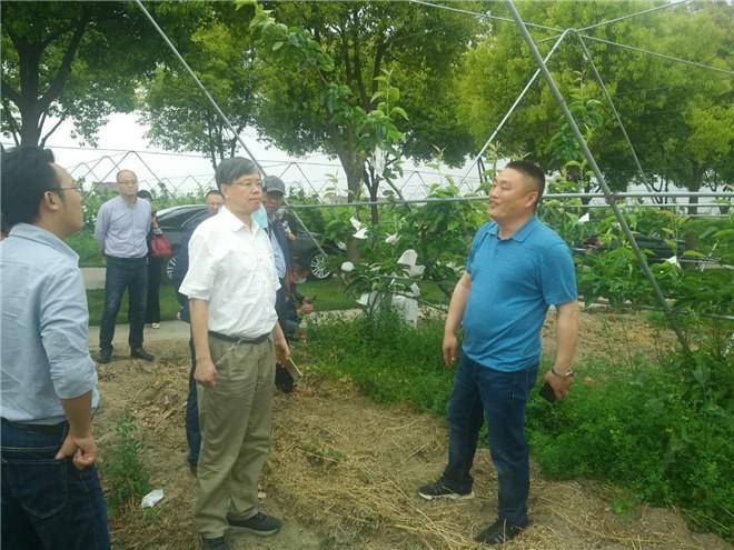 """江苏""""果园自动化避障割草装备技术引进试验""""项目启动会在泰兴召开"""